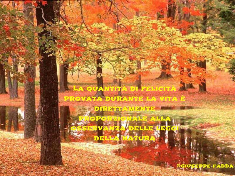 Autumn_natura-