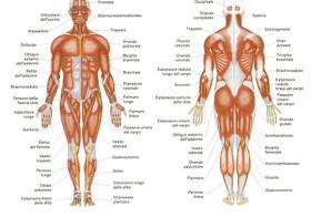 IL ciclo periodico di Massaggio Profondo